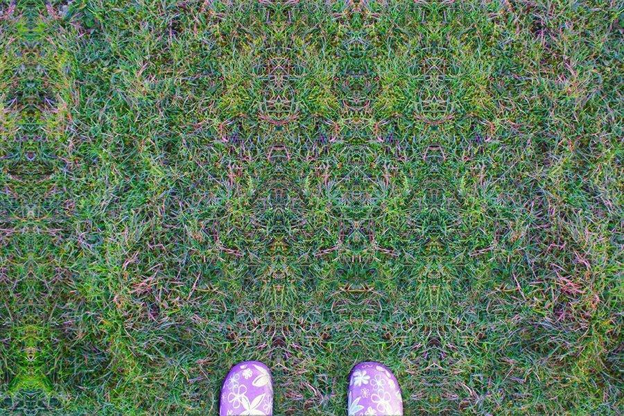 LSD psychedelics psychedelic drugs nature environmentally friendly reddit