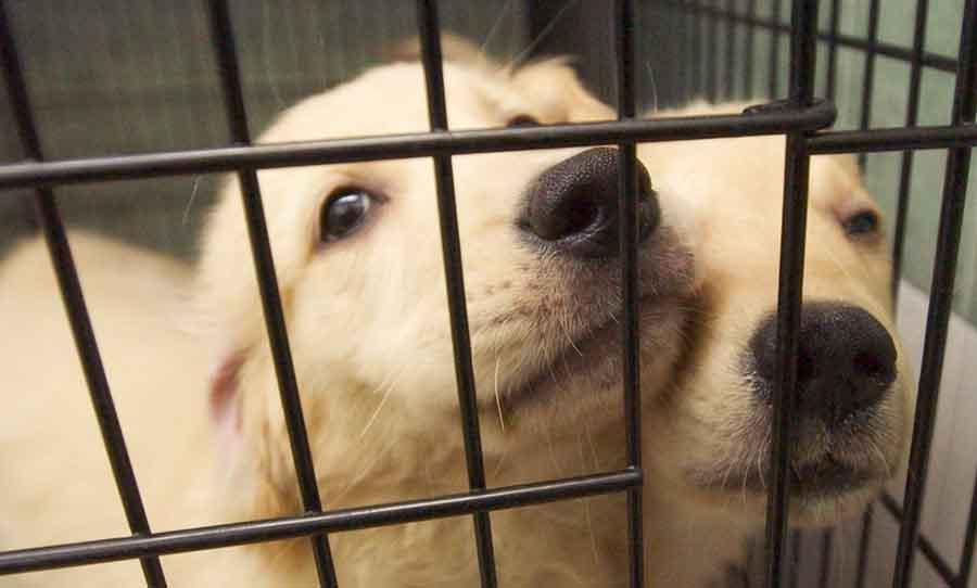 WA pet shops