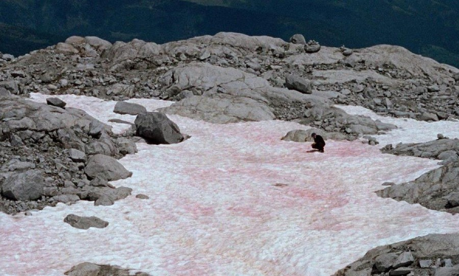 Italian Alps, pink snow, environmental disaster, climate change, global warming