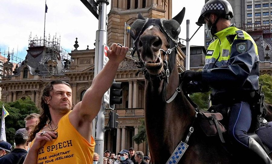 sydney protest horse punch